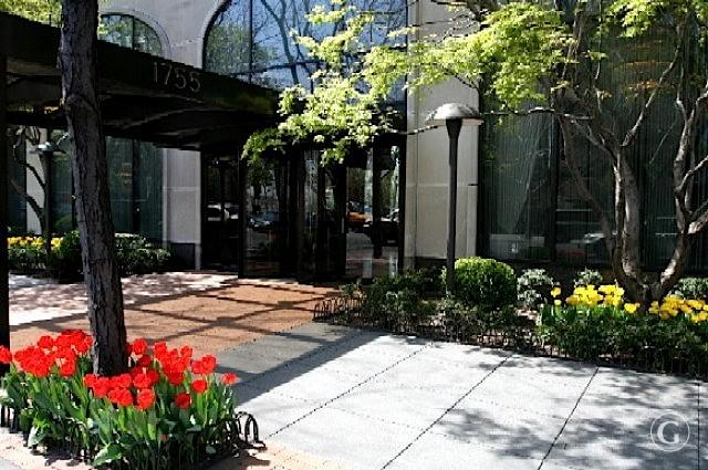Arclay entrance  tulips